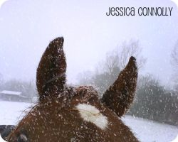 Pony in Snow by JACPhotography