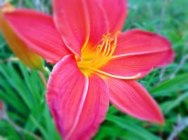 Fire flower by AnimalLover2436