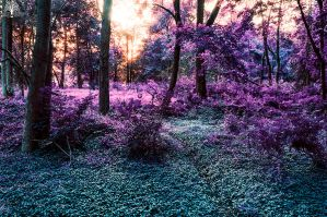 Twilight Forest by JustinDeRosa