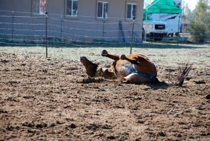 Good Roll after New Shoes by SaldaeanFarmgirl