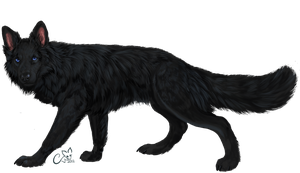 Black Shepherd by cottondragon