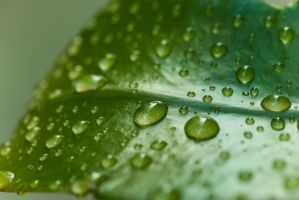 Water Droplets on a Leaf by PLutonius