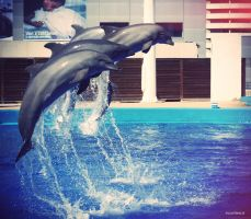 Dolphins. by Lalatina123