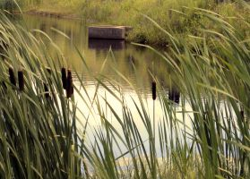 waterscape_the pond by Aimelle-Stock
