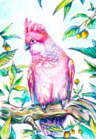 Pink parrot by LuckyTraveller
