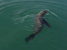 Seal by RiverKpocc