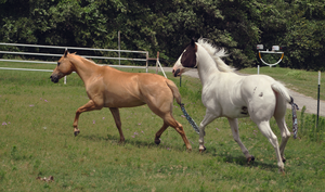 Belle And Marshmallow stock 1 by Flight-Stock