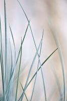 grasses 3 by JasonKaiser
