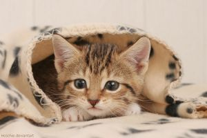 Wrapped in cuteness 2 by hoschie