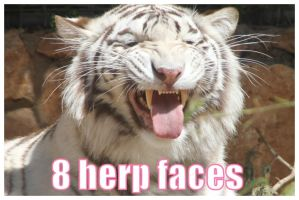 Tiger herp pack by Stock-Heil