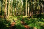 Forest Stock 22 by Sed-rah-Stock