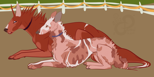 Envy and Dee: TKC Obedience Title CD by PaintedCricket