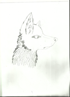 scan of wolf head~ by Divecchi