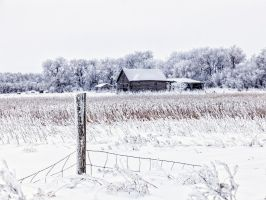 Home For Christmas by WayneBenedet