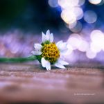 .: mini flower :. by all17