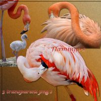 Flamingo's by libidules