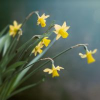 Narcissus by vQb