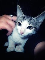 Curious cat by ale2xan2dra