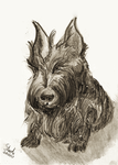 Scottish Terrier by SulaimanDoodle