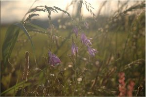 French Hedgerow Flowers 2 by turlough
