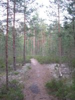 Forest path... by VelornVD