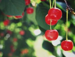 cherry and bokeh by Cub3ee