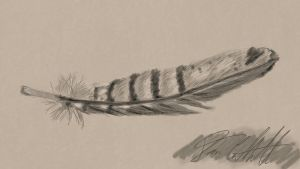 Pheasant Feather by ChozoBoy