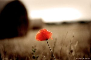 Lost Flower by italia