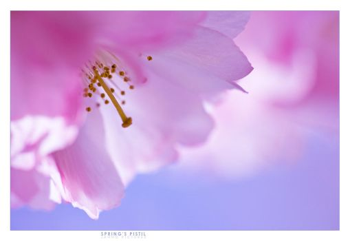 spring's pistil by jahno-pictures