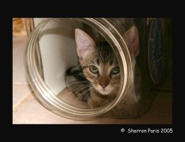 Kitty in a Jar by ShareLife