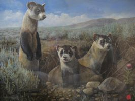 Ferret Painting by reggy66