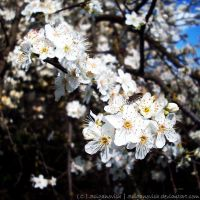 Pretty white little things by SCiganovich