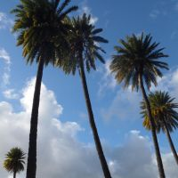 Palms - day by bmah