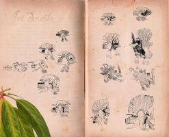 Field Notes - Jet Snails by whalewithlegs