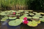 Pond Stock 05 by CD-STOCK