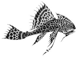Leopardfish by Powelly74