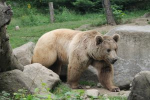 Bear 3 by Linay-stock