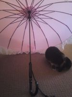 Photo: Bunny and The Parasol by mashashy