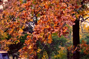 Autumn Colors by tracykenefick