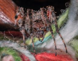 Yellow Eyed Spider II by drhine