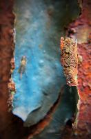 peeling paint on a rusted electrical panel by PAlisauskas