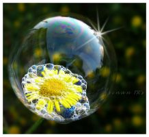 life in the bubble by sinanTR