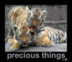 Precious Things in Life... by ischarm