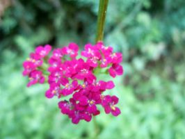 Pink And Green Macro by Rainbow826