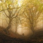 Magical forest by MariaBabintseva