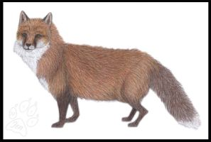 Vulpes The Second by JenTheThirdGal
