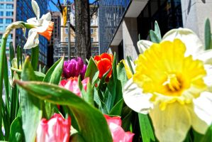 flowers in the concrete jungle by kendallcasimir
