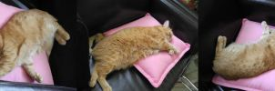 Qzzy's pink pillow by KruelaD-Savic