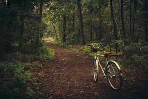 bicycle, forest, morning by in--between