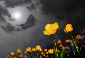 Daffodil Doomsday by jesus-at-art